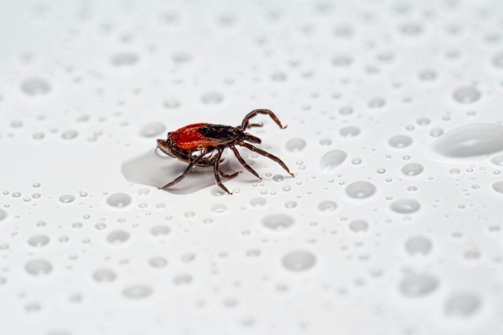 EC Cooper, Inc.   Avoid Ticks This Summer